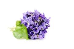 La bella molla fiorisce il mazzo delle viole, viola isolata su fondo bianco Primo piano, immagine con il fuoco molle Fotografia Stock Libera da Diritti