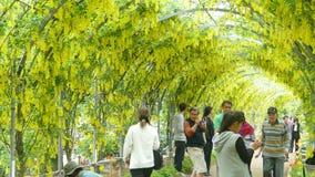 La bella molla fiorisce la serie, traliccio di glicine in giardino archivi video
