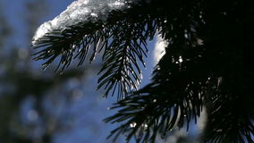 La bella molla viene paesaggio della montagna con le gocce della foresta del rallentatore di fusione della neve archivi video