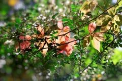 La bella natura in autunno, belle foglie di autunno si è accesa da luce solare immagini stock