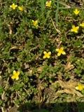 La bella natura dei fiori è bella fotografie stock