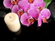 La bella natura morta della stazione termale del ramoscello di fioritura ha spogliato l'orchidea viola Immagine Stock