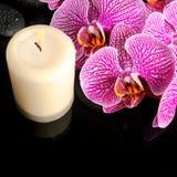 La bella natura morta della stazione termale del ramoscello di fioritura ha spogliato l'orchidea viola Fotografia Stock Libera da Diritti
