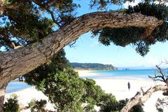La bella penisola di Coromandel fotografia stock