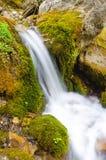 La bella piccola cascata di HDR di un fiume della montagna in una foresta ha sparato su un'esposizione lunga fotografie stock libere da diritti