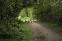 La bella primavera dei giovani figlia il gioco nella terra inglese della campagna Fotografie Stock