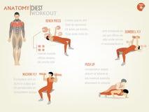 La bella progettazione infographic dell'allenamento del petto consiste Fotografia Stock