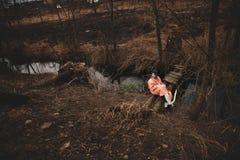 La bella ragazza è riposare, sedentesi su un piccolo ponte di legno fotografia stock libera da diritti