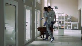La bella ragazza accompagna un tipo con un cane all'infermeria per gli animali video d archivio
