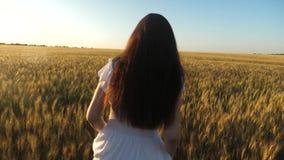 la bella ragazza cammina attraverso un campo di grano maturo Movimento lento La donna attraversa il campo con grano dorato contro video d archivio