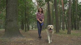 La bella ragazza cammina con un Labrador su un guinzaglio stock footage