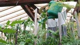 La bella ragazza felice in un cappello di paglia versa l'acqua sulle piante da un annaffiatoio in una serra stock footage