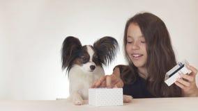 La bella ragazza teenager dà un regalo delizioso ad un cane Toy Spaniel Papillon continentale su fondo bianco fotografie stock