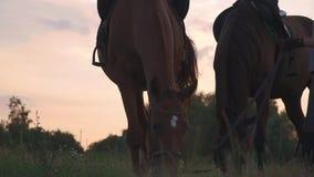 La bella ragazza tiene due cavalli per le redini video d archivio