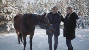 La bella ragazza viene fino al tipo e lo abbraccia Giovane bello che tiene le redini del cavallo che stanno sui precedenti stock footage
