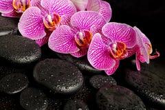 La bella regolazione della stazione termale del ramoscello di fioritura ha spogliato l'orchidea viola Fotografia Stock