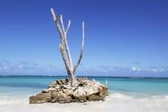 La bella spiaggia di Bavaro in Punta Cana, Repubblica dominicana fotografie stock libere da diritti