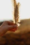 La bella tenuta della mano della donna di boho mette le piume a alla luce solare di sera, Fotografia Stock