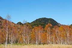 La bella vista delle foglie di autunno di Shiga Kogen nel Giappone fotografie stock