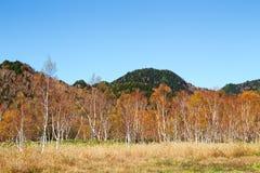 La bella vista delle foglie di autunno di Shiga Kogen nel Giappone immagine stock libera da diritti