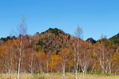 La bella vista delle foglie di autunno di Shiga Kogen nel Giappone fotografia stock