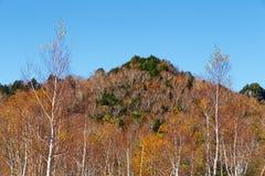 La bella vista delle foglie di autunno di Shiga Kogen nel Giappone fotografia stock libera da diritti