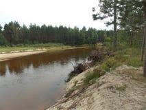 La bella vista di piccolo fiume della foresta di estate immagini stock libere da diritti