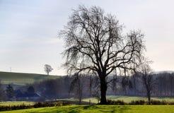 Vista di un albero con il terreno boscoso dietro Fotografia Stock Libera da Diritti