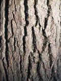 La belle écorce avec de la mousse verte Images libres de droits