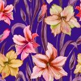 La belle amaryllis colorée fleurit avec les feuilles pourpres sur le fond bleu Modèle sans couture de ressort Peinture d'aquarell Photo stock