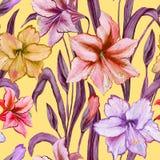 La belle amaryllis fleurit avec les feuilles pourpres vertes sur le fond jaune Modèle sans couture de ressort Peinture d'aquarell Photos stock