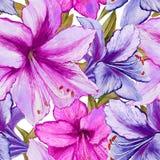 La belle amaryllis pourpre et rose vive fleurit sur le fond blanc Modèle sans couture de ressort Peinture d'aquarelle Photographie stock libre de droits