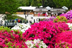 La belle azalée fleurit au tombeau de Nezu, Tokyo Photographie stock