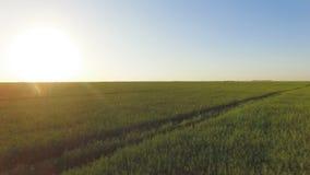 La belle basse vue aérienne des champs de vert d'été avec le soleil clignote banque de vidéos
