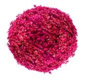 La belle boule a formé le rose/buisson rouge d'isolement sur le fond blanc image libre de droits