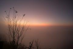 La belle branche de l'arbre et le lever de soleil brumeux aménagent en parc pendant le matin Photo stock