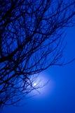 La belle branche de l'arbre et le lever de soleil brumeux aménagent en parc pendant le matin Image stock