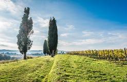 La belle campagne de Lucignano Image stock