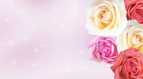 La belle carte de Valentine avec les roses colorées neigent et bokeh sur p Photo libre de droits