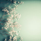 La belle carte de voeux florale avec le petit Gypsophila blanc fleurit sur le fond de turquoise, frontière assez florale Images stock