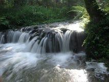 La belle cascade à écriture ligne par ligne dans la forêt Image libre de droits