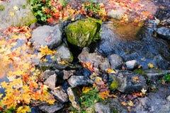 La belle crique d'automne avec le jaune de flottement part dans le parc de Pavlovsk avec l'eau bleue et les pierres images libres de droits