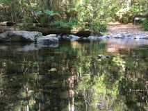 La belle eau sereine avec des réflexions des arbres environnants Image stock