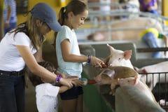 La belle famille alimente le porc Images libres de droits