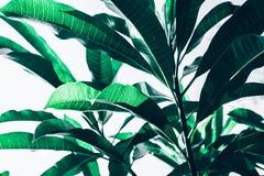 La belle feuille laisse des idées de milieux de modèle de texture images libres de droits