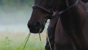 La belle fille avec de longs cheveux monte un cheval, mastications herbe, brouillard d'un cheval autour, début de la matinée banque de vidéos