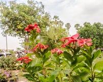 La belle fleur Images stock