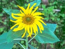 La belle fleur Images libres de droits
