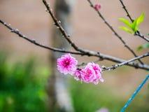 La belle fleur Image libre de droits