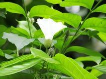 La belle fleur blanche de couleur photos libres de droits